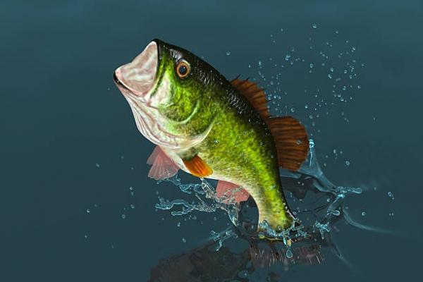 bass-placeE08D4F25-979A-C4AB-A319-B2013CC1FFF4.jpg
